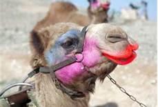 I do believe its Wednesday Sexy-camel1