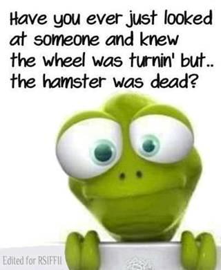 wheels turning but hamster dead