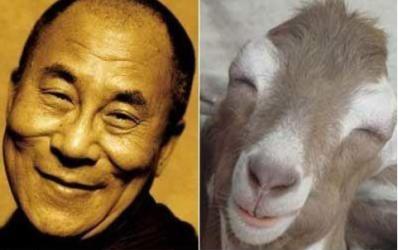 Dahli Lama, Happy Llama