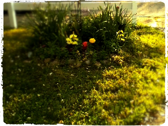 Flowerbeds in fading evening