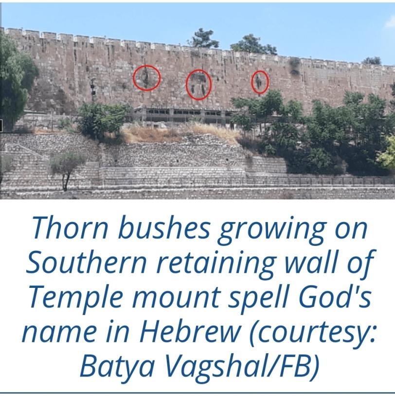 Vis Israel365 News